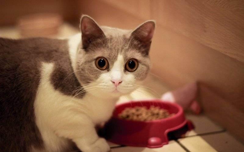 Ваш котенок уже слишком взрослый, чтобы продолжать есть корм для котят?