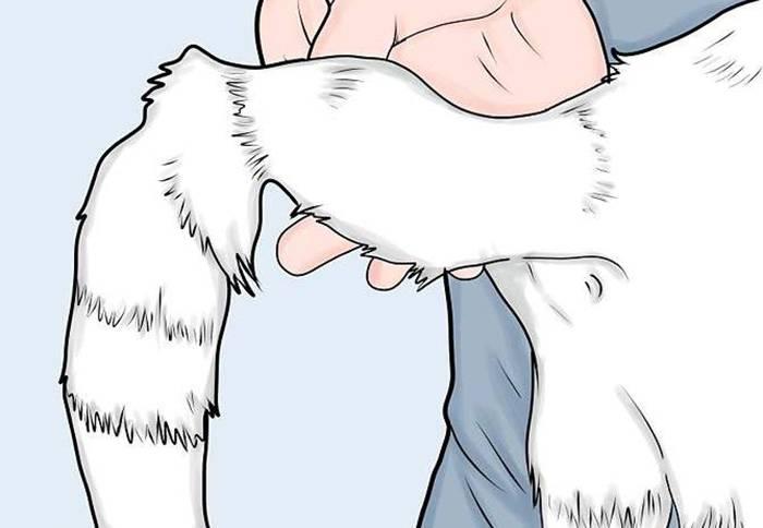Лечение переломов у кошек: бедра, лапы, позвоночника, пальца, ребер, таза, хвоста, челюсти.