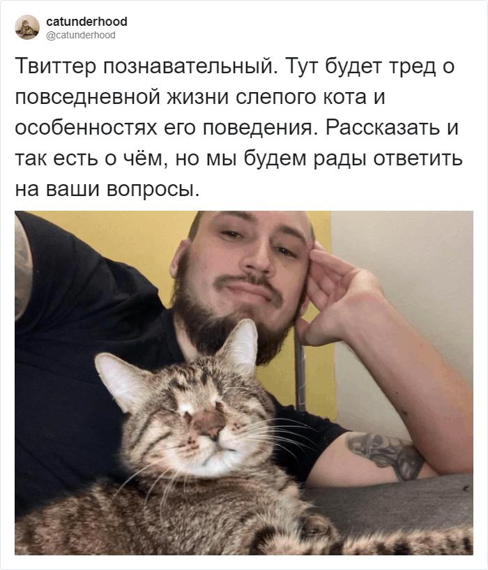 Об ответственности хозяина животного - запись пользователя -alzu- (-alzu-) в сообществе домашние животные в категории мошенничество, споры, обсуждение - babyblog.ru