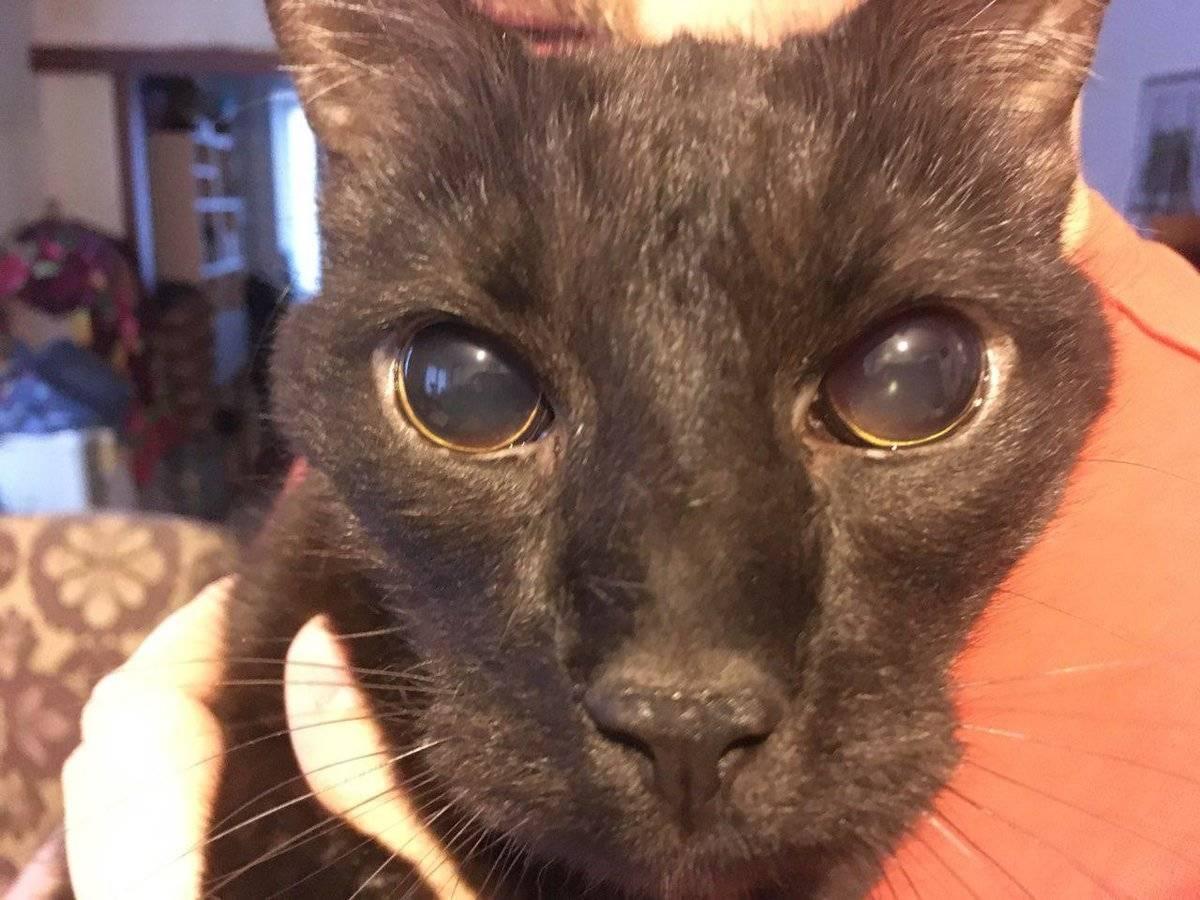 У кошки один зрачок узкий другой широкий - zhivomag