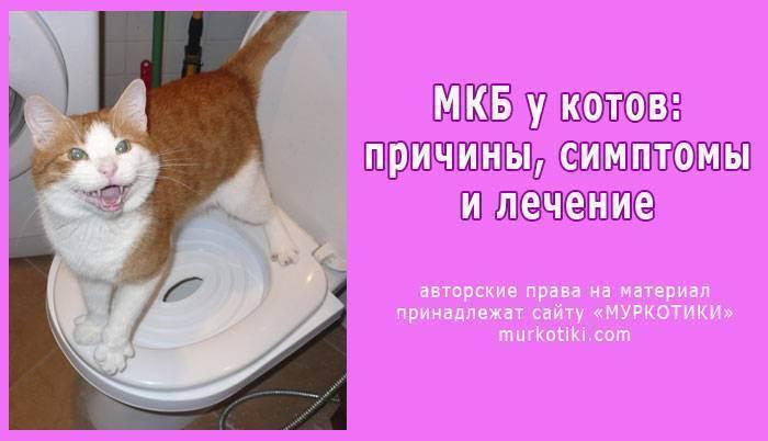 Мочекаменная болезнь у кошек: причины, симптомы, лечение и последствия