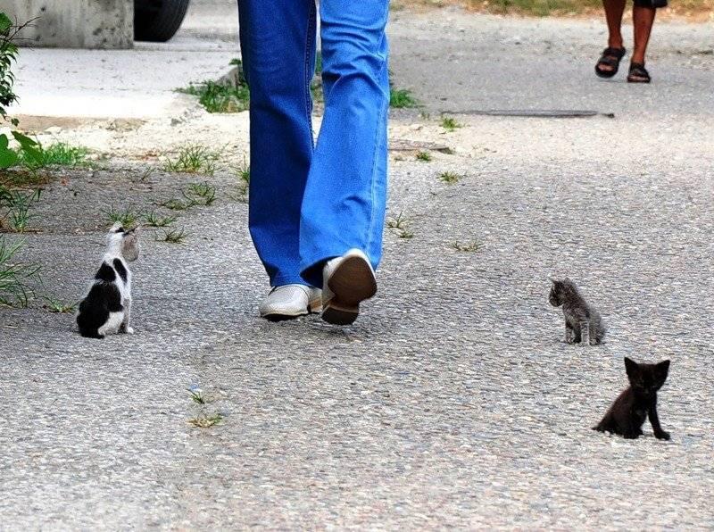 Что делать с котенком с улицы – 6 рекомендаций будущим хозяевам