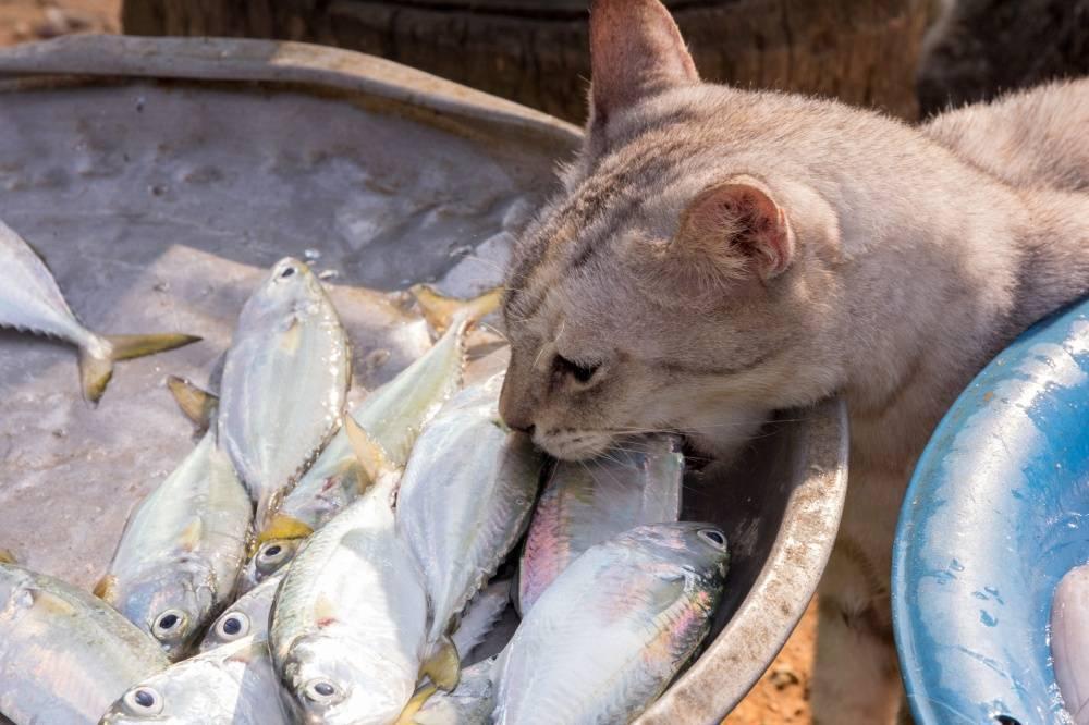 Почему коты любят рыбу
