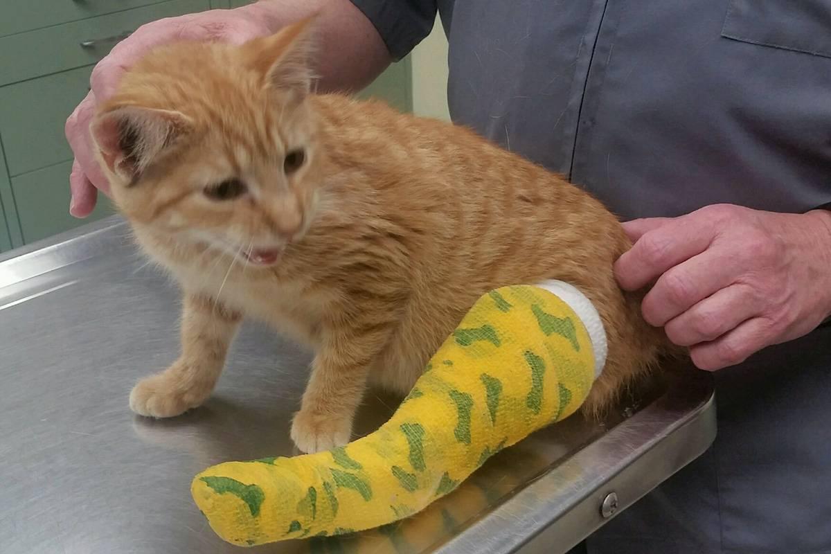 Заживет ли перелом без гипса у кота - ушиб-лечение