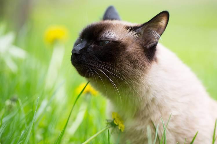 Кошка и улица: кто кого? - что делать, если кошка просится на улицу, приучение и отучение от улицы, прогулка зимой и летом -всё о кошках и котах