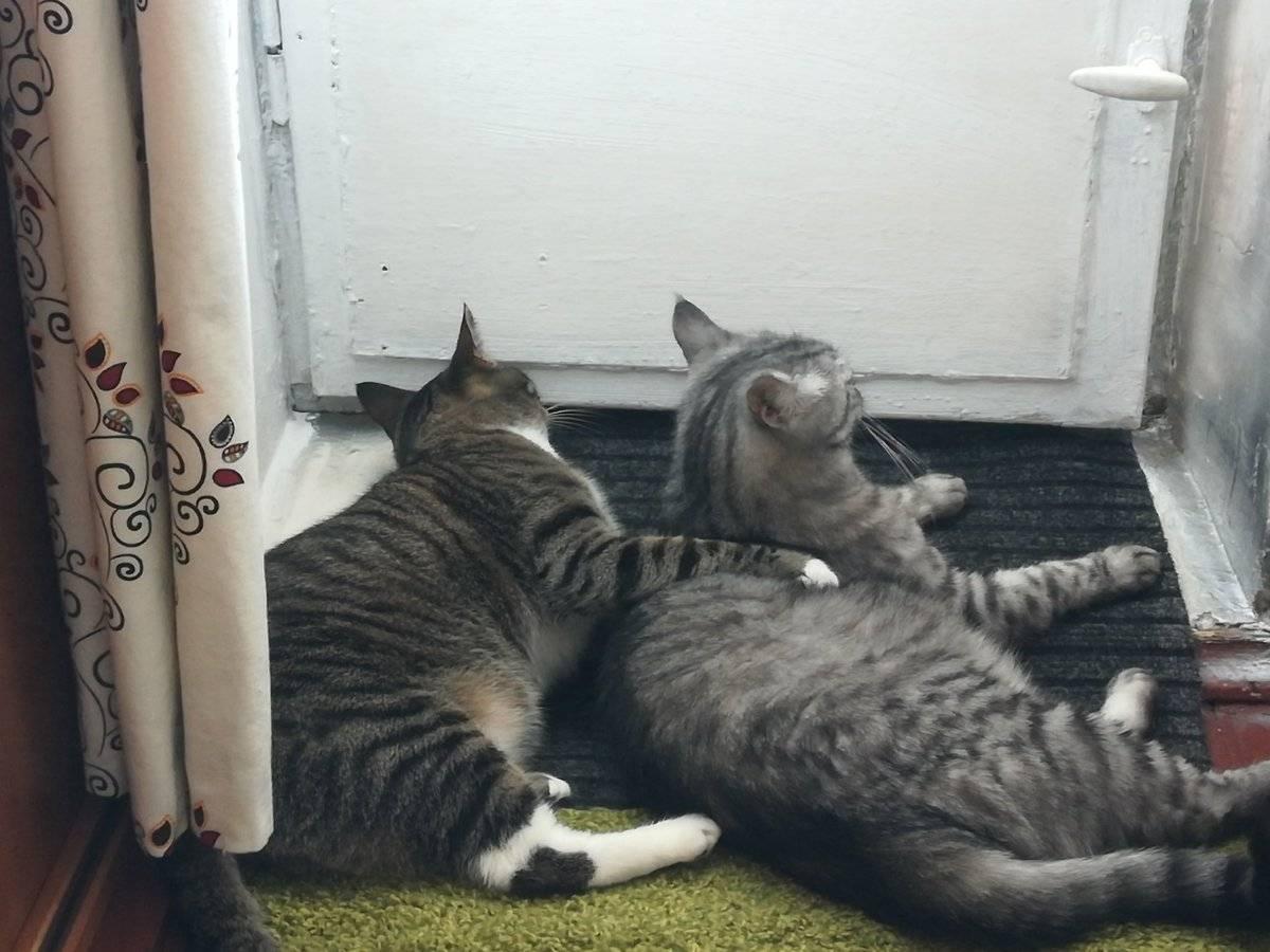 Адаптация кошки в новом доме