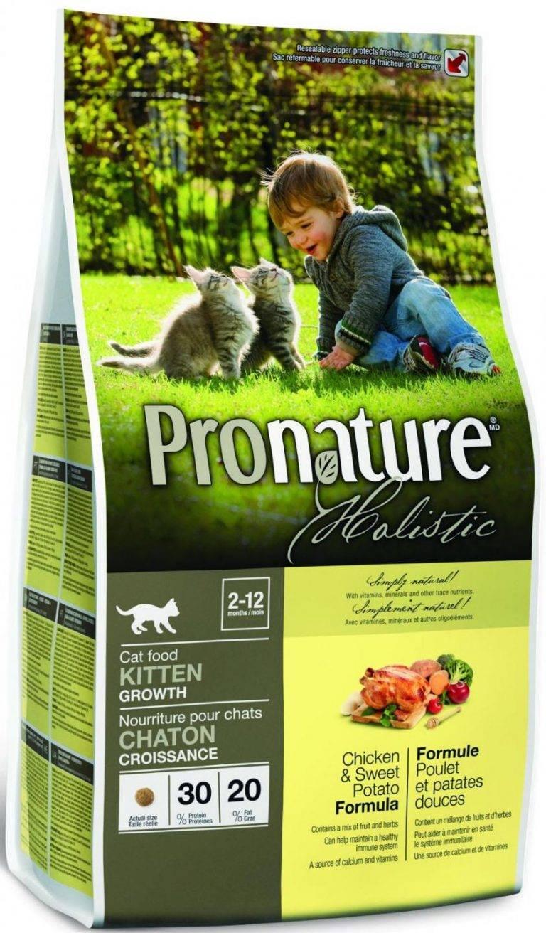 Советы ветеринаров, каким кормом кормить кошку — рейтинг + фото - женская жизньженская жизнь