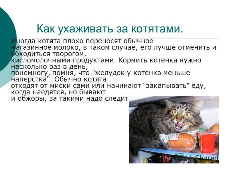Как ухаживать за брошенным новорожденным маленьким котенком в 1-2 недели или 1 месяц: уход без кошки за месячным малышом