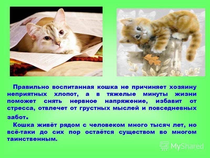 Можно ли бить кота почему нельзя - oozoo.ru