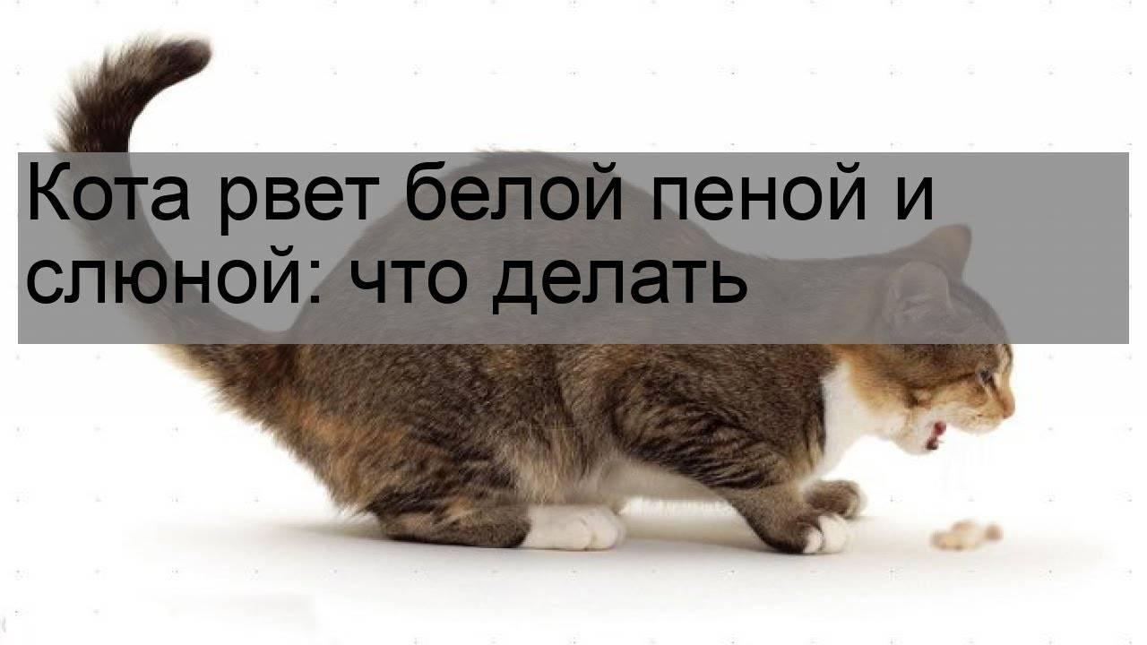 Кошку рвёт белой пеной: причины рвоты и первая помощь