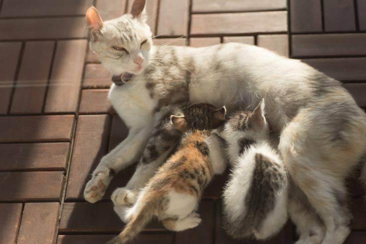 Стерилизация кошки на дому: за и против