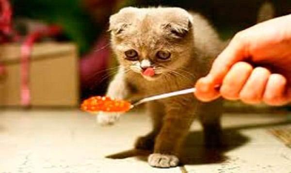 Отсутствие аппетита у котов, кот не ест или есть мало - симптомы, лечение, препараты, причины появления | наши лучшие друзья