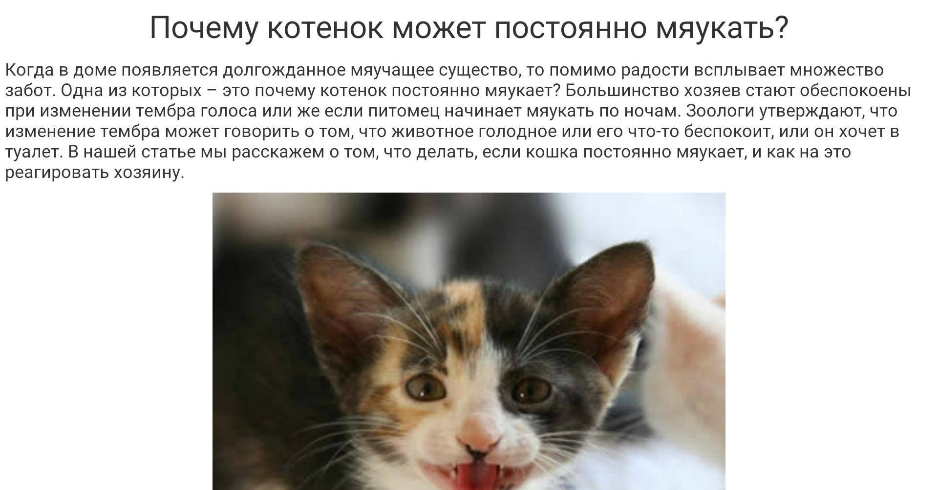 Что делать, если стерилизованная кошка орет? | рутвет - найдёт ответ!