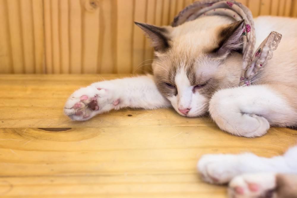 Мы расскажем, что нужно предпринять, если кот тяжело дышит