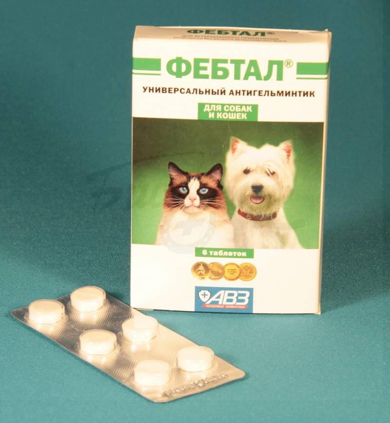Фебтал для собак: описание, инструкция, отзывы. фебтал для кошек: инструкция по применению, состав, дозировка и цена фебтал комбо для собак инструкция по применению