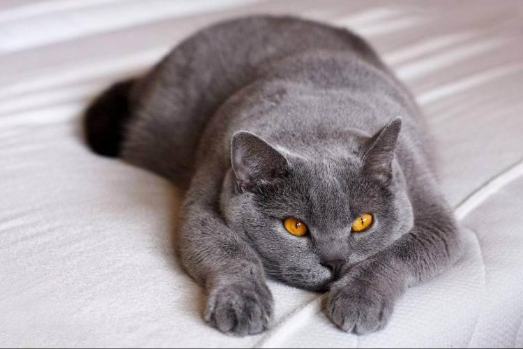 Стригущий лишай у кошек: признаки и лечение болезни