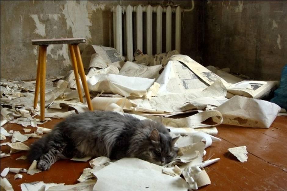 Как отучить кота драть в доме обои?