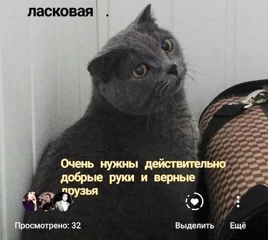 Как воспитать ласкового и послушного котенка - kotiko.ru