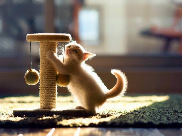 Как выбрать или сделать когтеточку для кошки