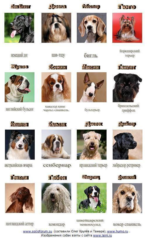 Топ-40 самых красивых пород собак