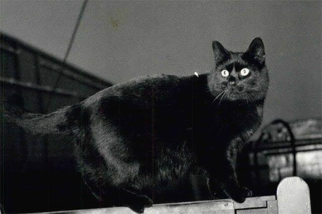 Кошка на даче: как защитить сад от кошки и кошку от сада?