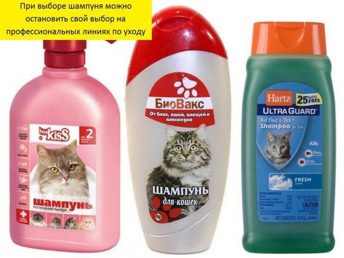 Шампунь от блох для кошек: виды, состав, действие, как использовать
