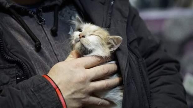 Почему кот стал агрессивным: причины и что делать | кот и кошка
