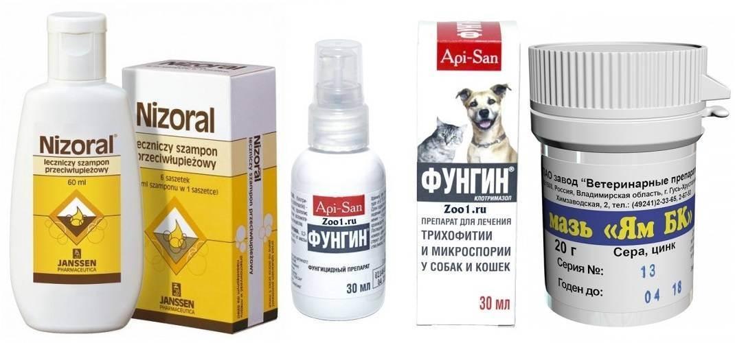 ᐉ чем лечить лишай у кошки? - ➡ motildazoo.ru