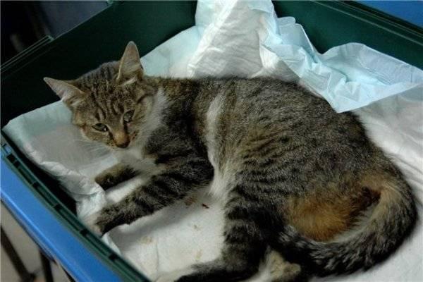 Усыпление кошек: как безболезненно усыпить