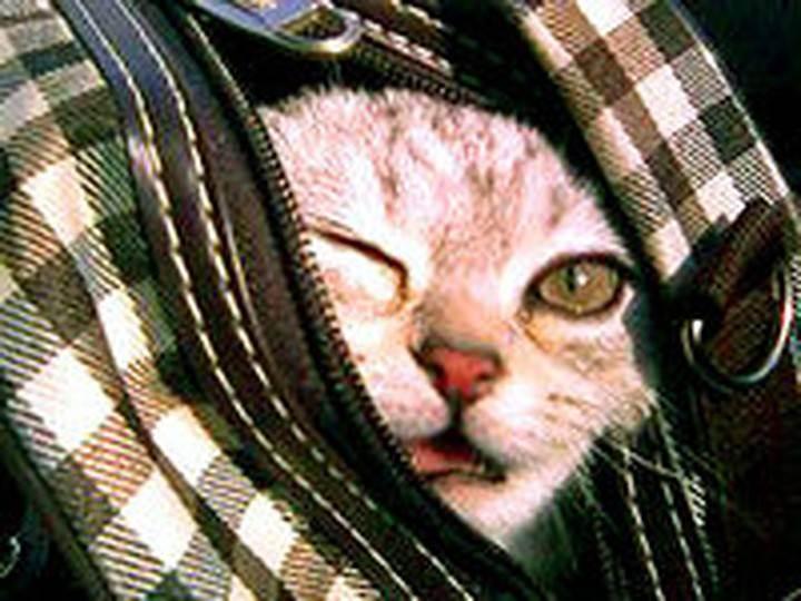 Как помочь коту пережить жару: советы владельцам