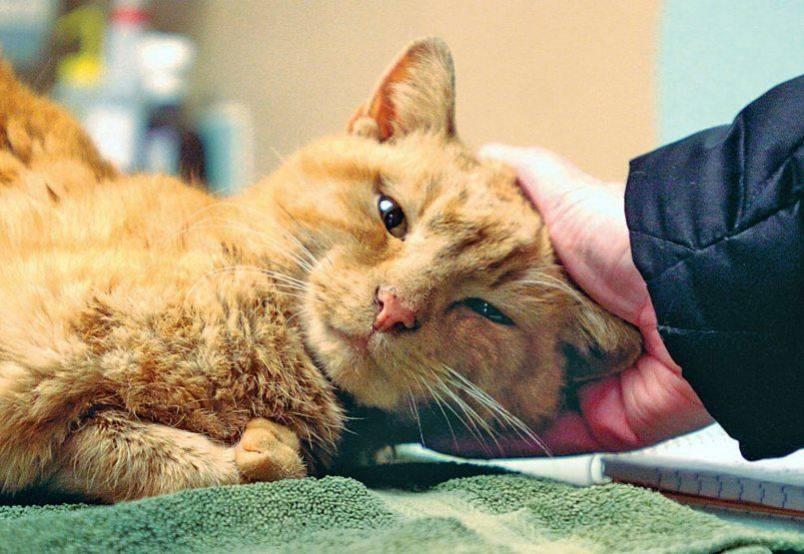 Сальмонеллез у кошек: источники заражения, симптомы, лечение