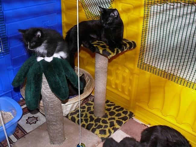 Как правильно ухаживать за кошкой или котом в домашних условиях – в квартире или частном доме?