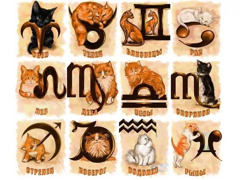 Коты по знаку зодиака лев
