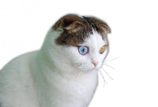 Как воспитать или перевоспитать кошку?