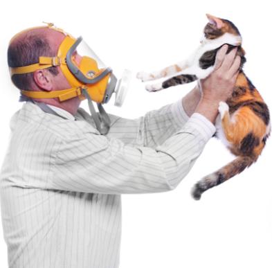У меня аллергия на сибирских кошек