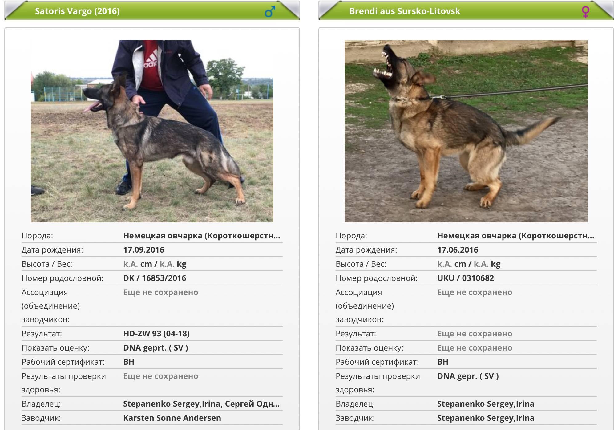 Вес немецкой овчарки в 2 месяца и до года. стандарты в 2, 3, 4, 5 месяцев вес немецкой овчарки и даже новорожденного щенка (по неделям)