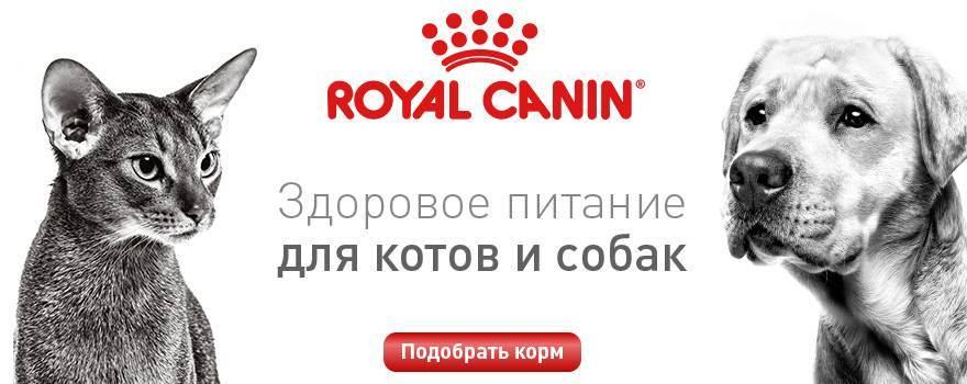 Топ-8 интернет-магазинов зоотоваров — рейтинг зоомагазинов 2020