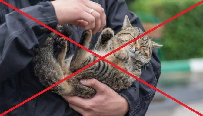 Почему кошка приземляется на четыре лапы. почему кошки всегда приземляются на лапы. чем опасна небольшая высота