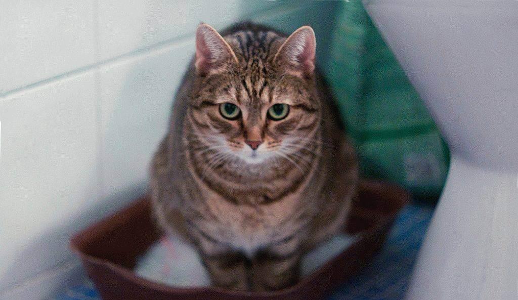 Рецепты натурального питания для кошек