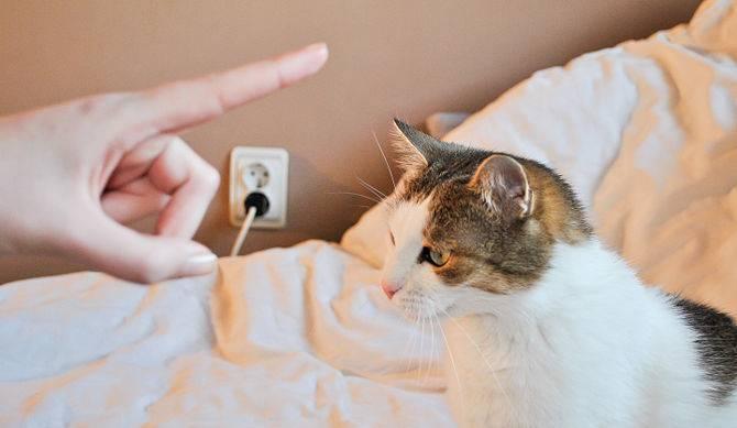 Как наказать кота за то что нагадил. можно ли бить кошку, как наказать за плохое поведение