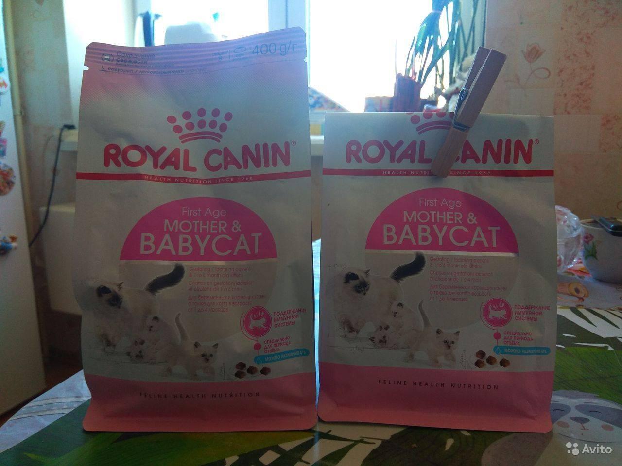 Чем кормить кормящую кошку: натуральное питание или сухие корма?