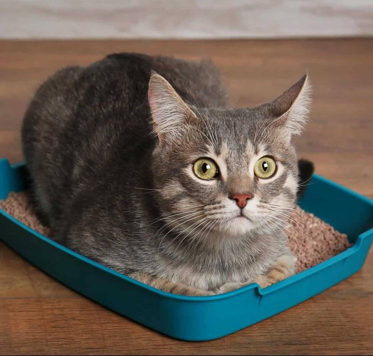 """Кошка приучена к жидким кормам типа """" феликс"""" и т. д. как отучить её от этой гадости?"""