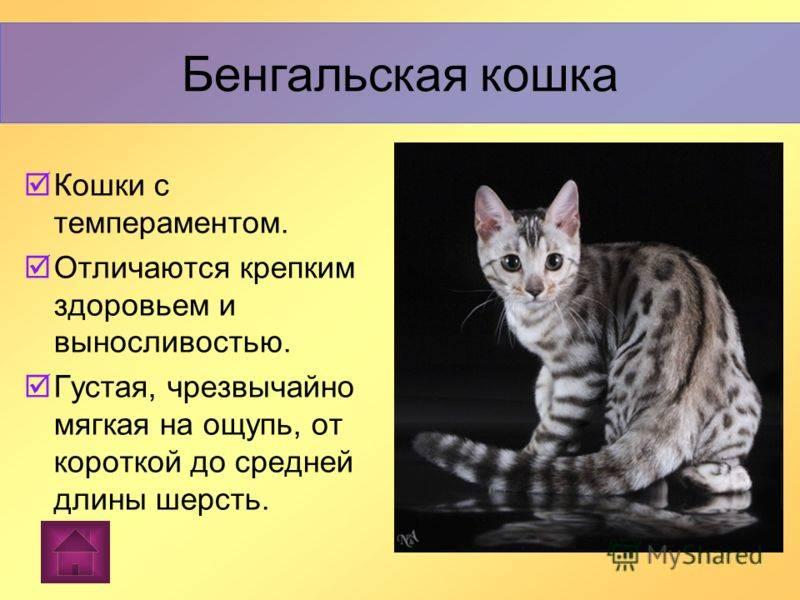 Особенности дикой длиннохвостой кошки