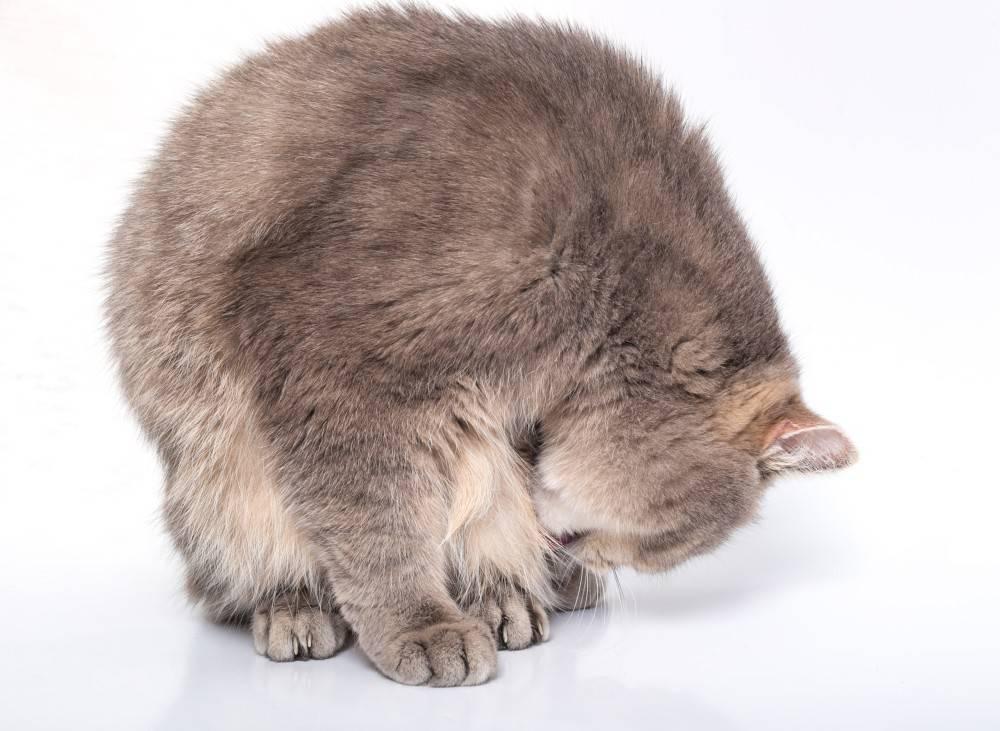 Сонник черная кошка мяукает. к чему снится черная кошка мяукает видеть во сне - сонник дома солнца