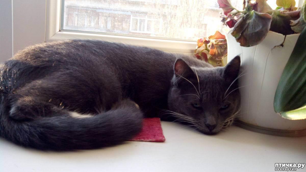 Кастрация кота: вопросы - если кастрировать кота он перестанет метить - запись пользователя алёна (id2171841) в сообществе домашние животные в категории кошки. болезни, прививки, советы по уходу - babyblog.ru