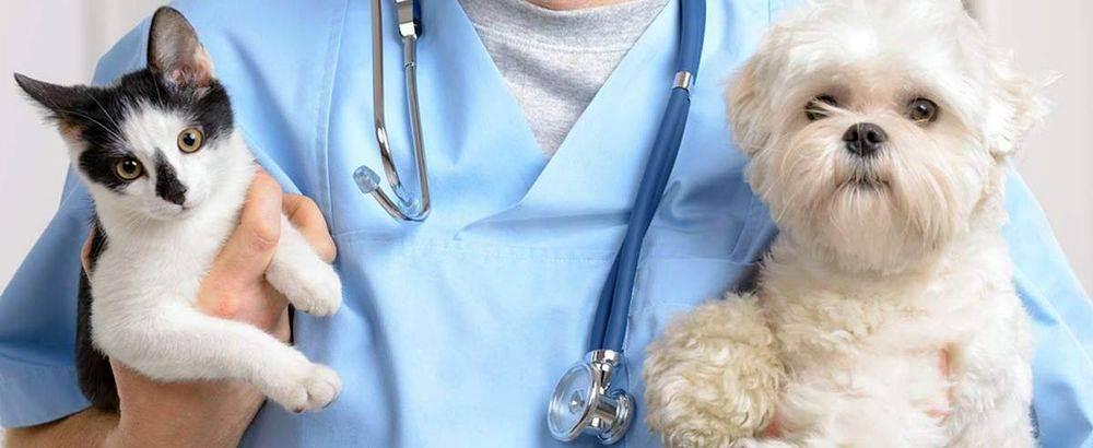 Правила приема, осмотра и лечения в ветеринарной клинике «ветдоктор»