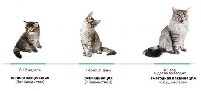 Прививки для кошек: от каких болезней, когда делать, таблица, вакцины
