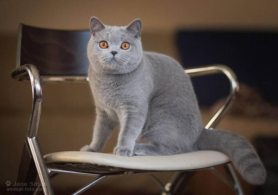 Что делать если кошка просит кота. советы ветеринара