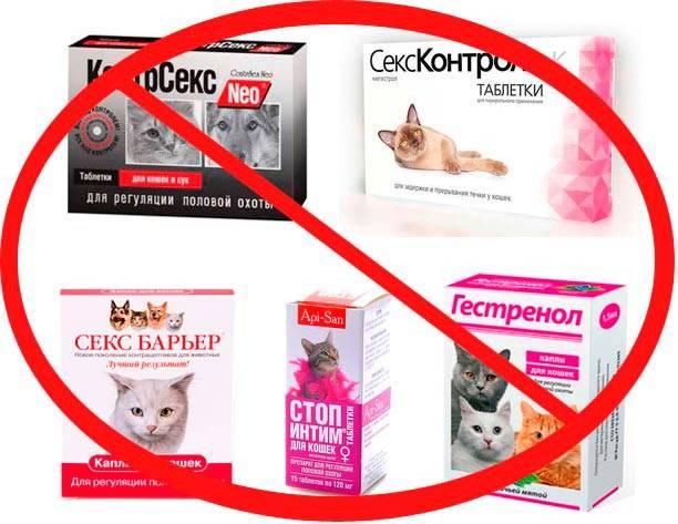 Как кормить кастрированного кота: 90 фото кормов и рекомендации чем кормить кота