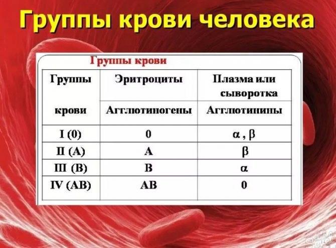 Группы крови у кошек   http://creambel.com